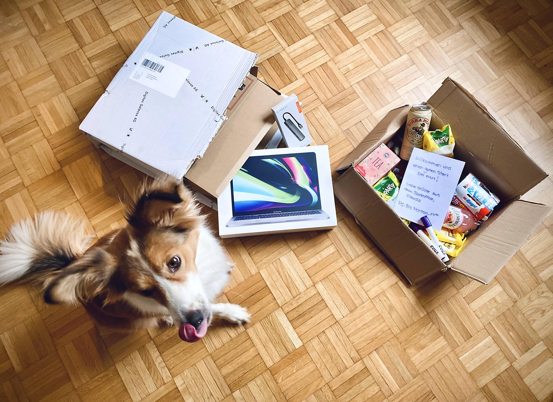 Hund, Laptop und Karton